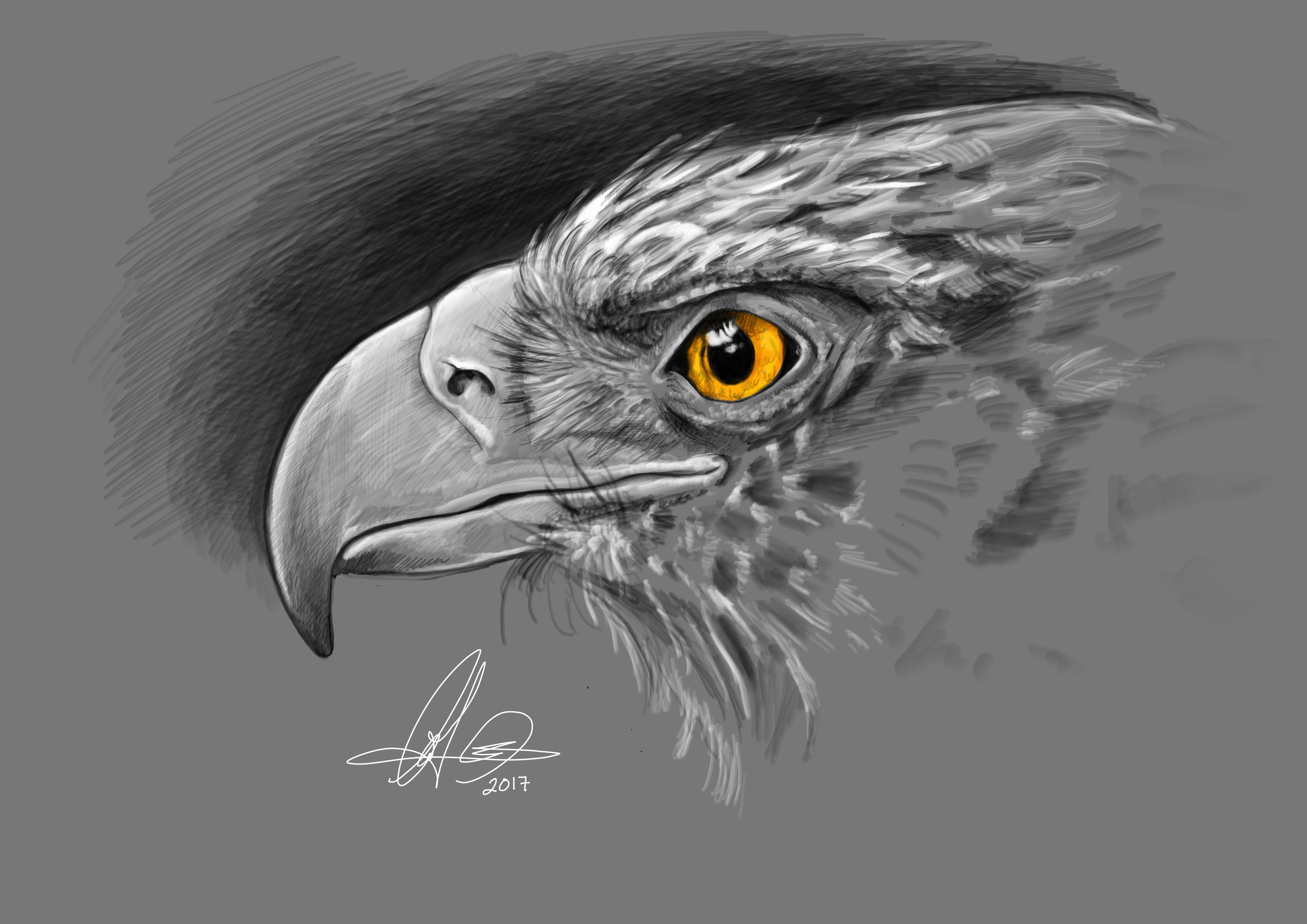 Eagle head. Digital art