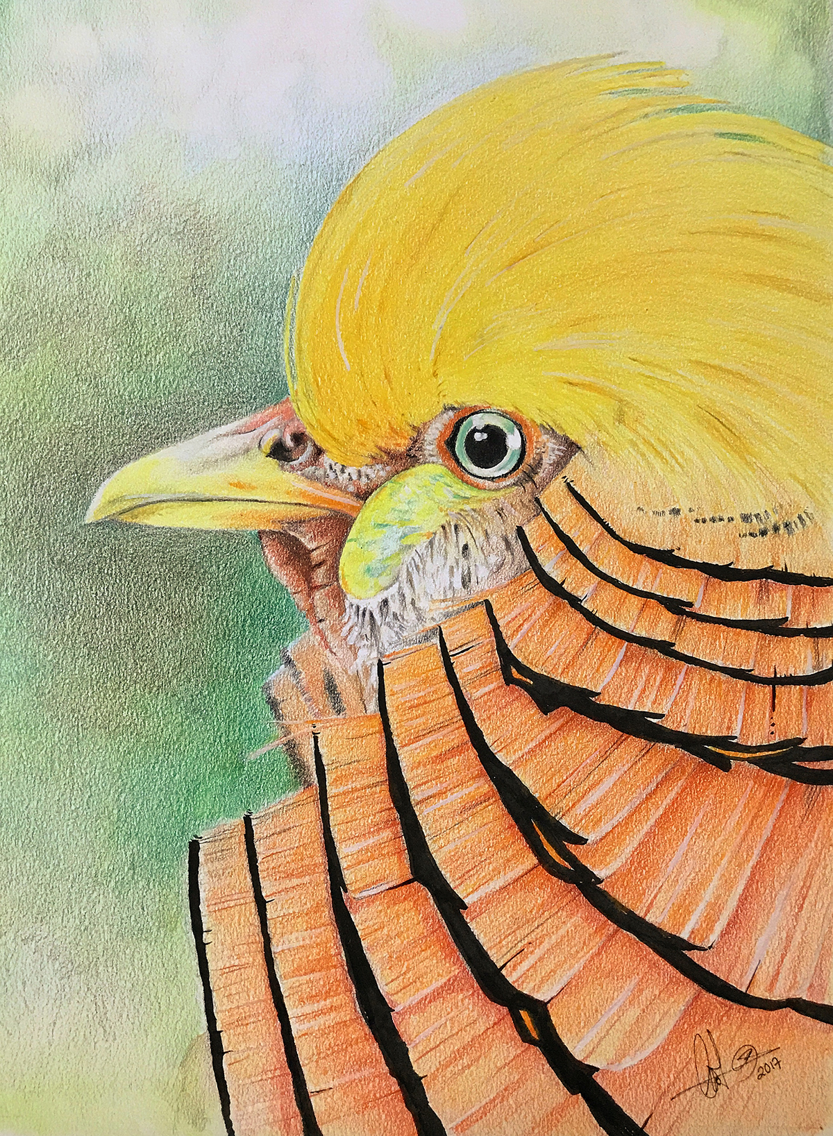 Golden Pheasant. Color pencils on tonedn paper