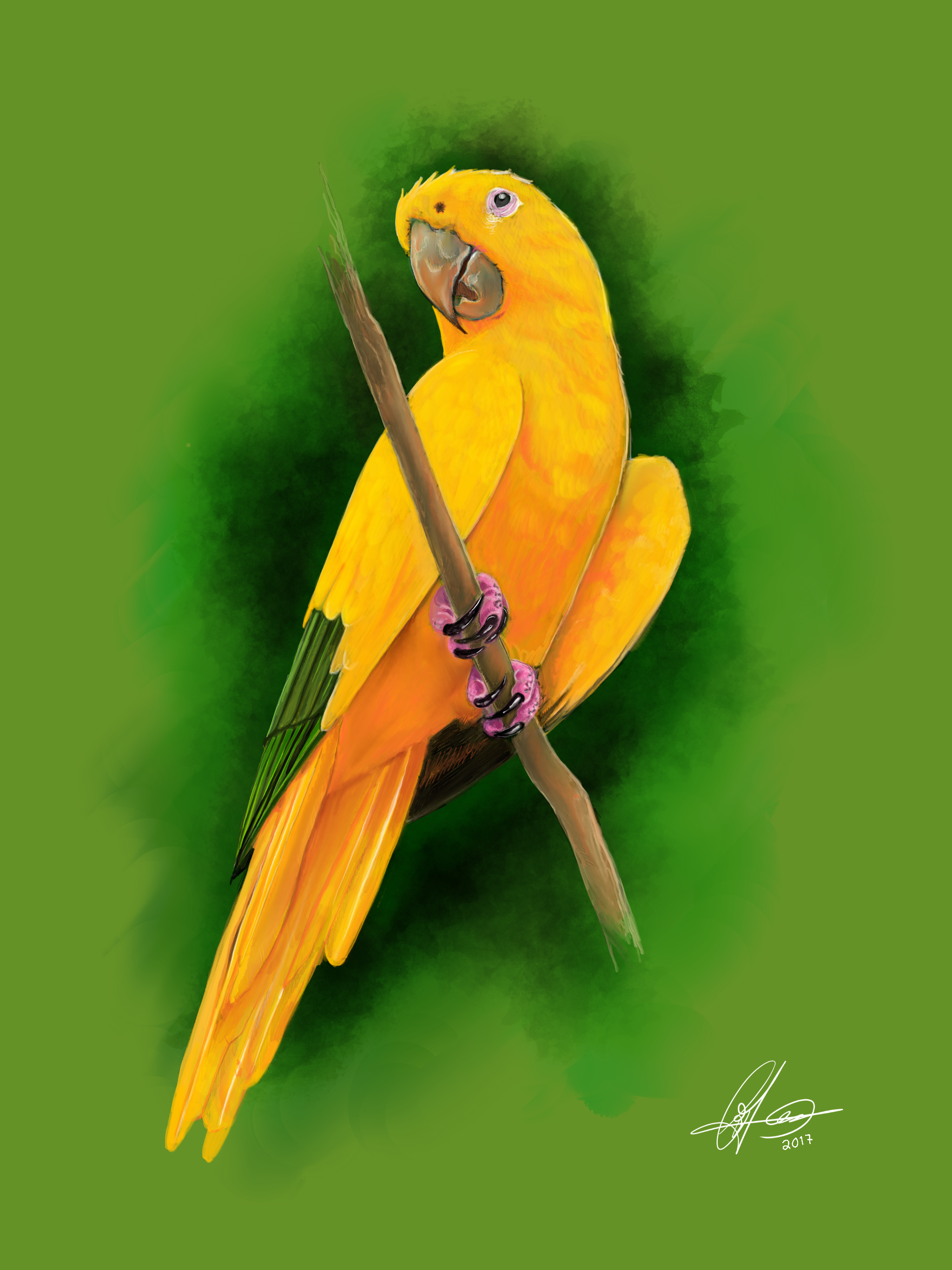 Parakeet. Digital art